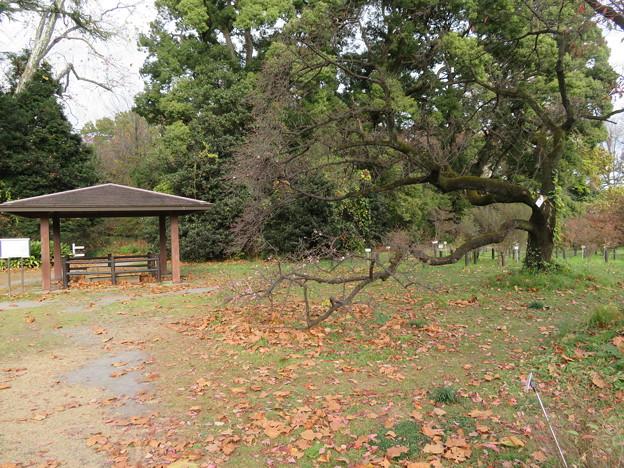 小石川植物園005