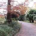 小石川植物園032