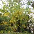 Photos: 小石川植物園039