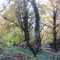 Photos: 小石川植物園038