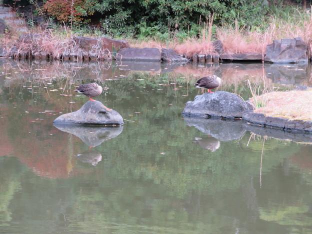 小石川植物園023
