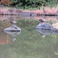 Photos: 小石川植物園023