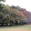 小石川植物園010