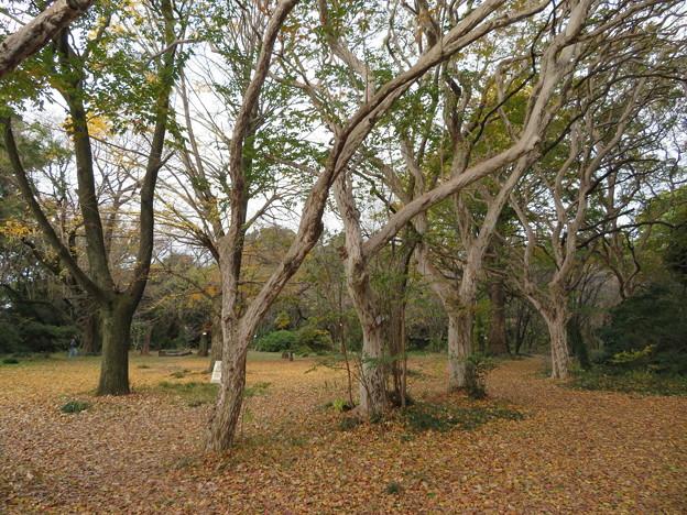 小石川植物園014