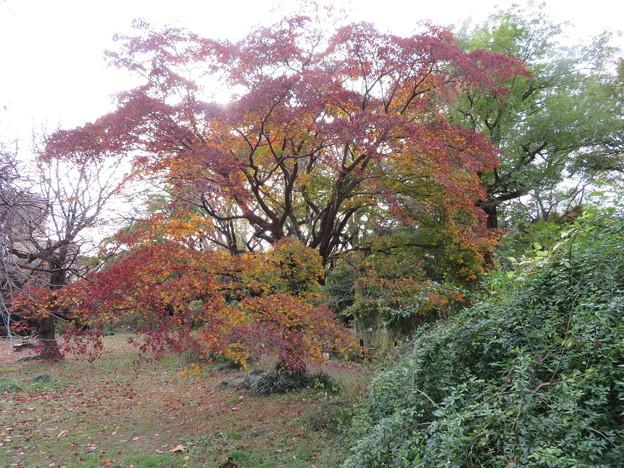 小石川植物園004