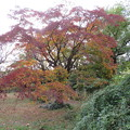 Photos: 小石川植物園004
