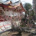 素盞雄神社11
