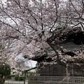 諏訪山 吉祥寺09