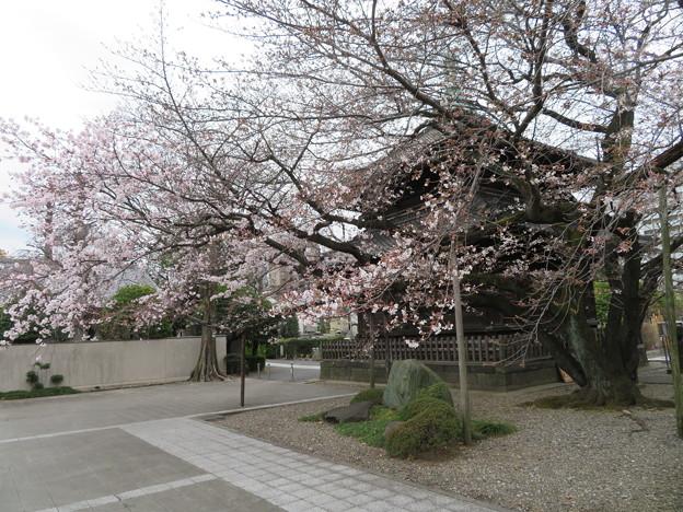 諏訪山 吉祥寺08