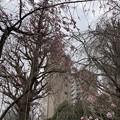 諏訪山 吉祥寺12