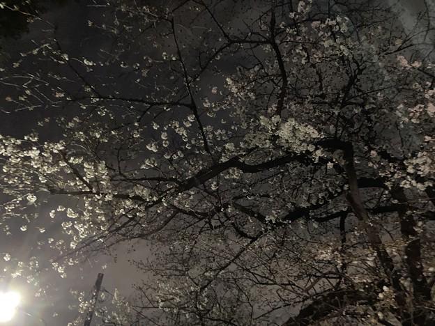 染井霊園01