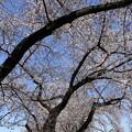 染井霊園06