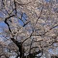 染井霊園05