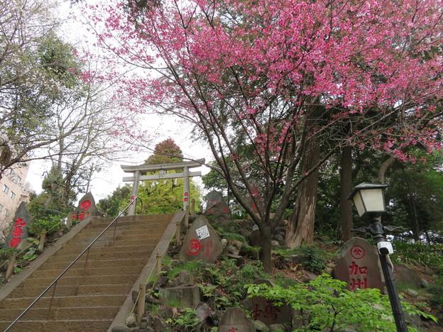 駒込富士神社02
