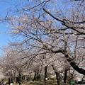 Photos: 飛鳥山04