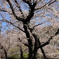 Photos: 飛鳥山03