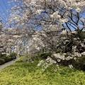 Photos: 飛鳥山01
