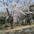 Photos: 飛鳥山08
