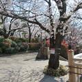 Photos: 飛鳥山05