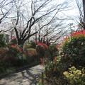 Photos: 飛鳥山06