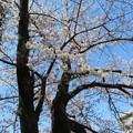 Photos: 石神井川04