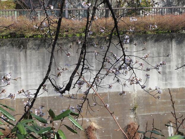 Photos: 石神井川03
