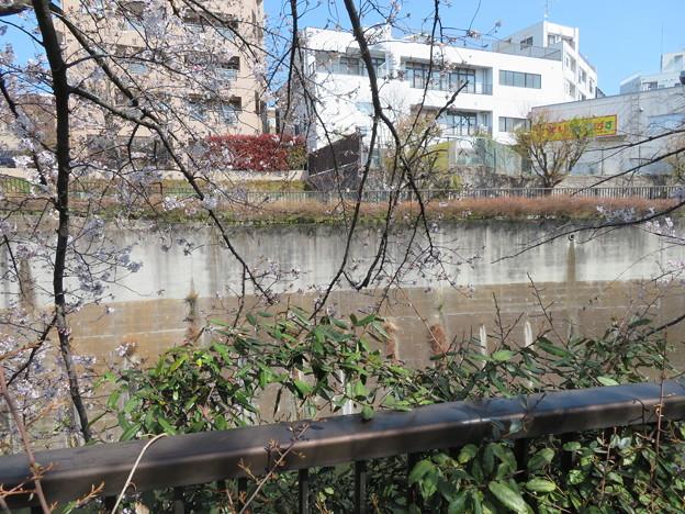 石神井川02