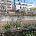 Photos: 石神井川02