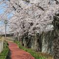 Photos: 石神井川01