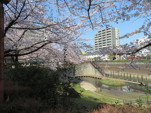 石神井川06