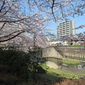 Photos: 石神井川06