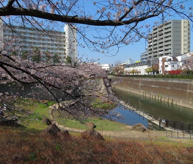 石神井川05