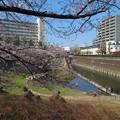 Photos: 石神井川05