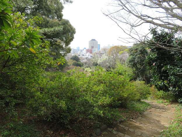 小石川植物園19