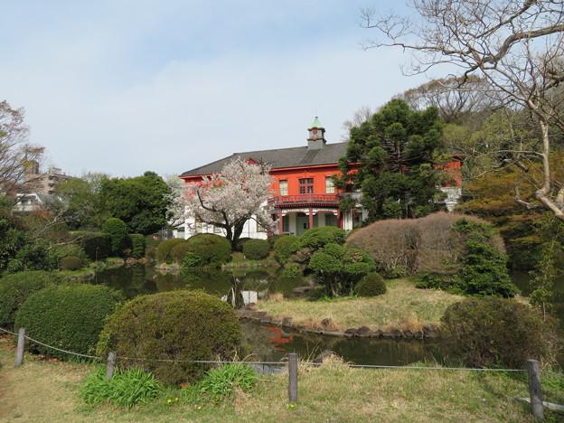 小石川植物園20