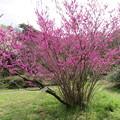小石川植物園29