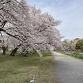 小石川植物園36