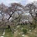 小石川植物園39