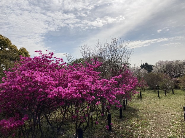小石川植物園40