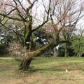 小石川植物園15