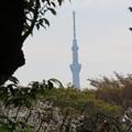 小石川植物園12