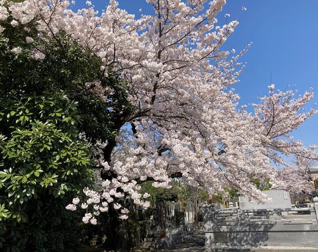 諏訪山 吉祥寺4