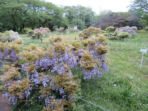 小石川植物園08