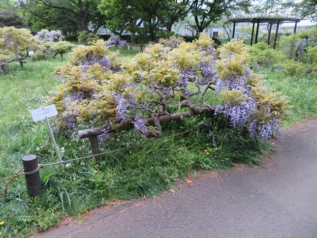 小石川植物園06