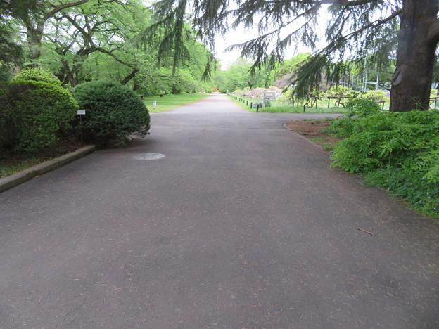 小石川植物園05