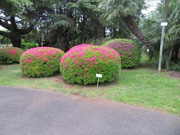 小石川植物園03