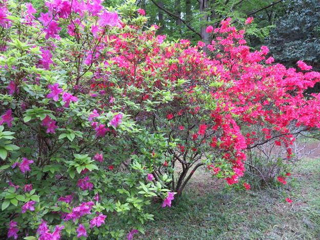 小石川植物園47