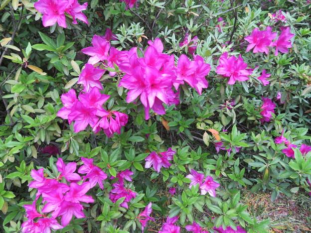 小石川植物園45