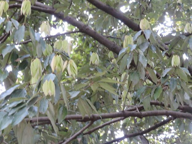 小石川植物園44