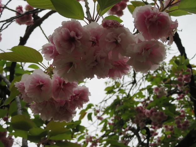 小石川植物園43
